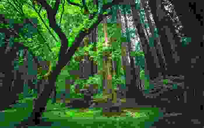 Selva del Amazonas
