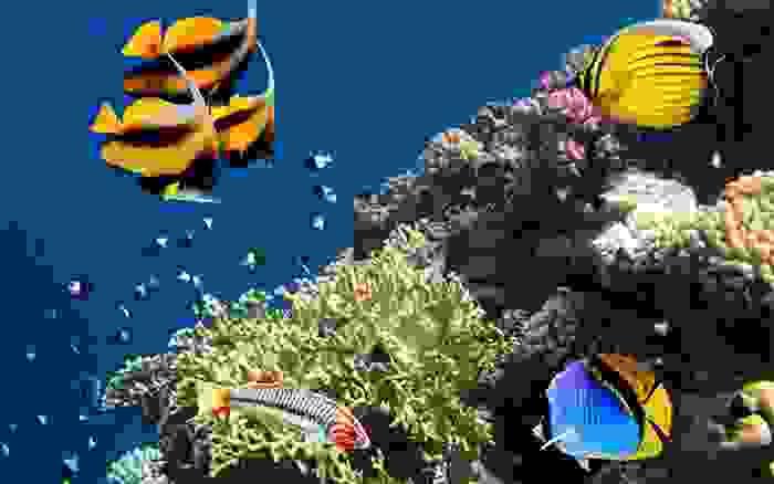 Corales en las profundidades egipcias del Mar Rojo