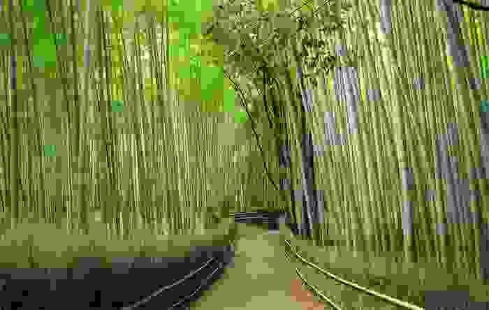 Bosque de bambú, en Arashiyama
