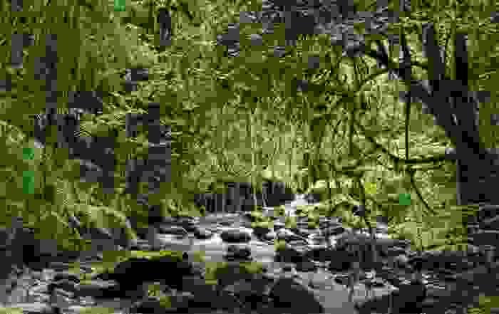 Parque Nacional de Ranomafana