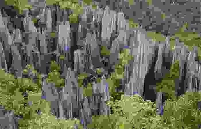 Cúspides de caliza en el Parque Nacional de Gunung Mulu