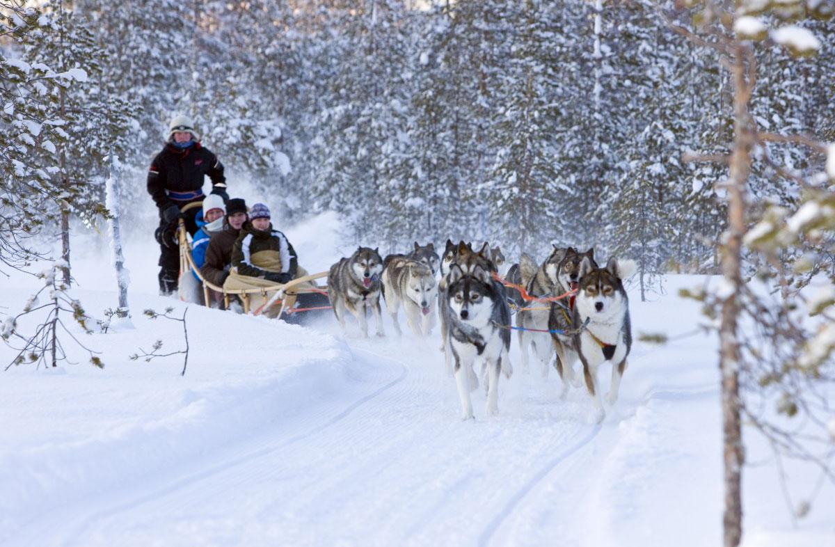 Paseo en huskies por los bosques noruegos