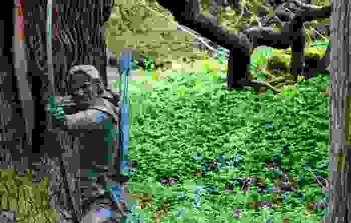 Bosque de Sherwood cerca de Nottingham, escenario de la leyenda de Robin Hood