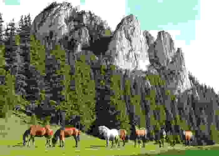 Caballos libres en las Montañas de los Cárpatos