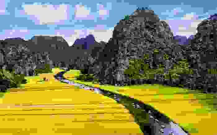 Campos de arroz en Trang An